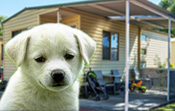 Beachlands Holiday Park allows dogs